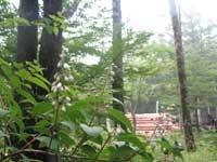 20070701f4.jpg